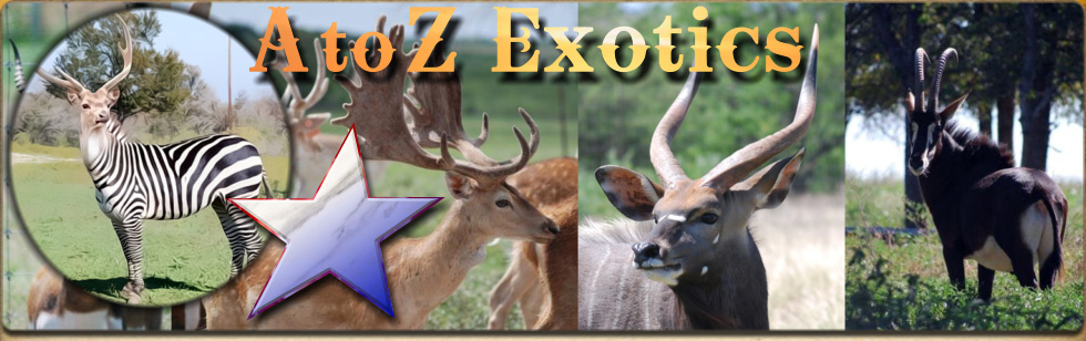 A to Z Exotics - Exotic deer in Texas